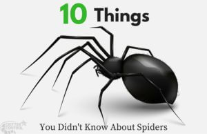 CC HOuston - 10 Things You Didn't Know About Spiders